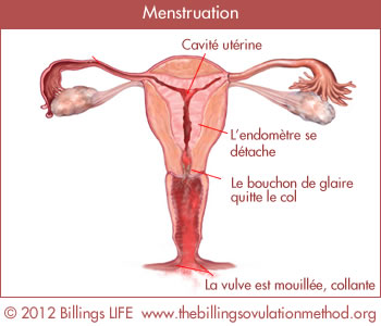 menstruation fr