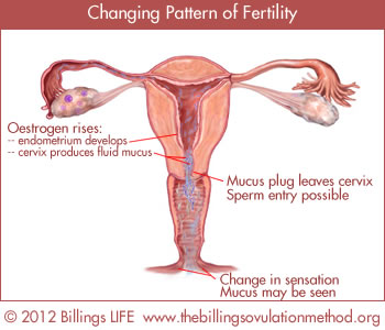 changingpatternfertility